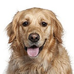 Granule pro starší psy