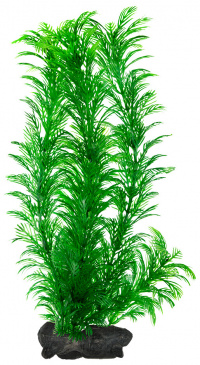 Akvarijní rostliny