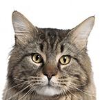 Pamlsky pro starší kočky