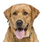 Granule pro aktivní dospělé psy