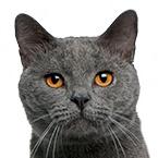 Pamlsky pro dospělé kočky