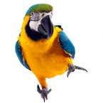 Ptáci title=