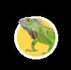 Для рептилий