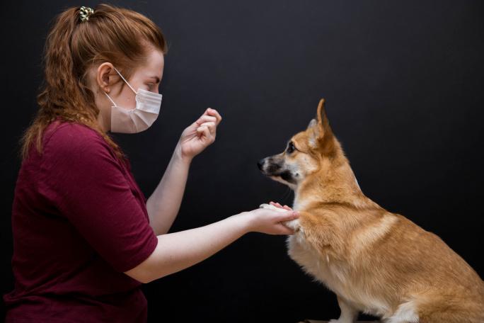 Současná situace aneb jak ji zvládnout se svým psem? title=