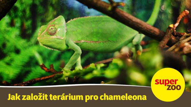 15. díl Jak založit terárium pro chameleona title=