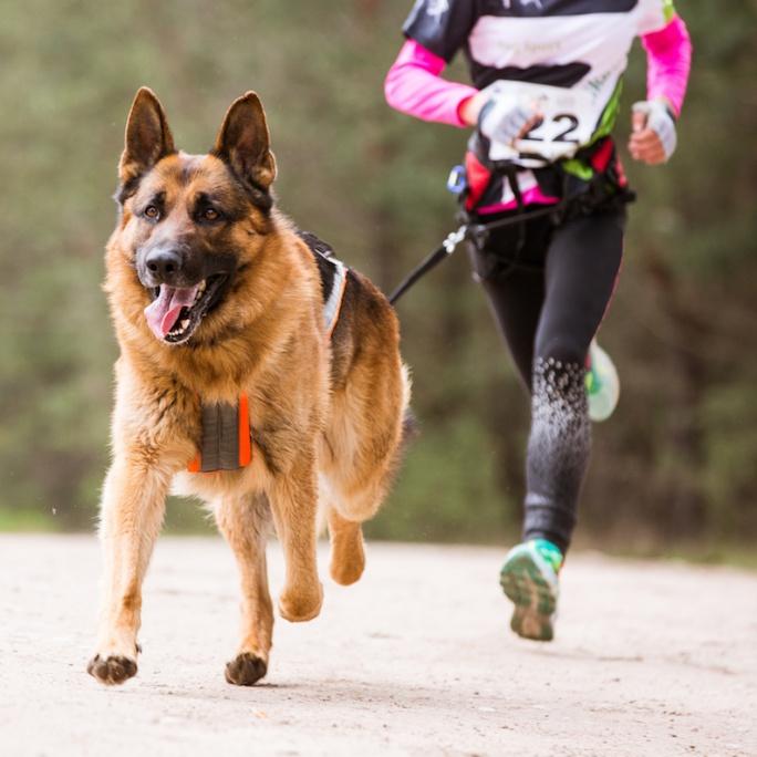 Beh so psom: krásny šport i spoločná radosť