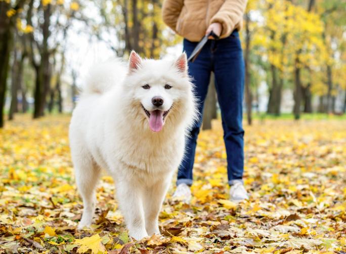 Podzimní venčení psů