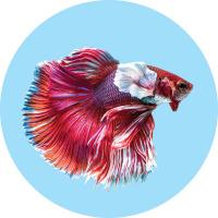 Akvarijní ryby na prodejnách title=
