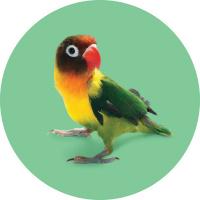 Okrasné ptactvo a papoušci na prodejnách title=