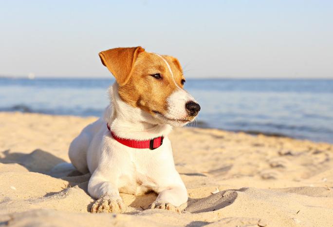 7 tipů, jak zpříjemnit psovi léto title=