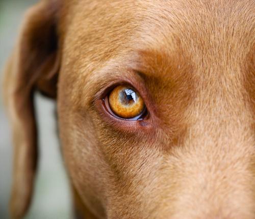 Jak vidí pes? title=